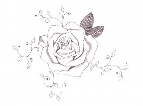 Rose & Vines
